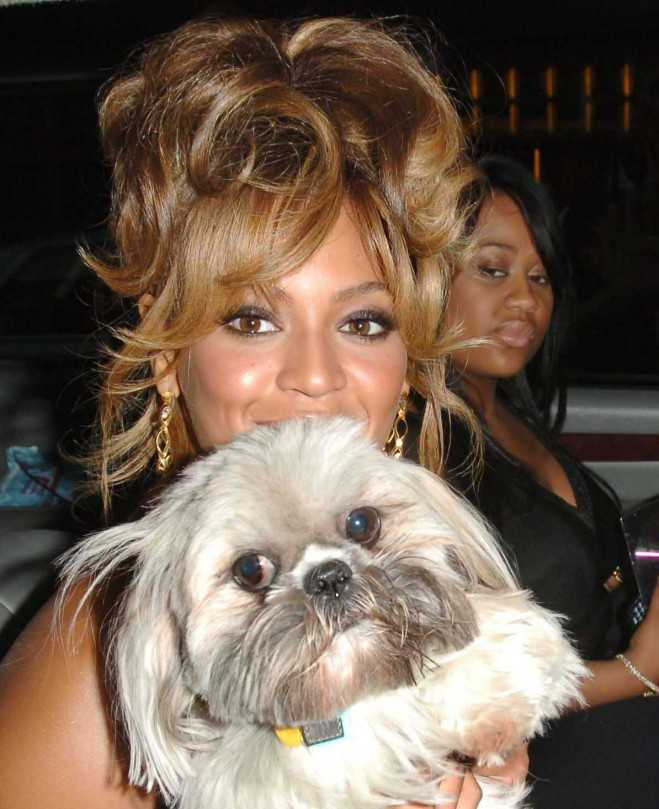 Beyonce Knowles with her dog in NYC