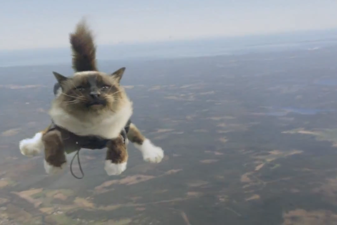 Swedish Cat Ad I Believe I Can Fly Feature