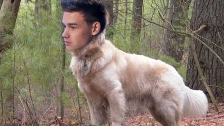 One Direction Animals Feature