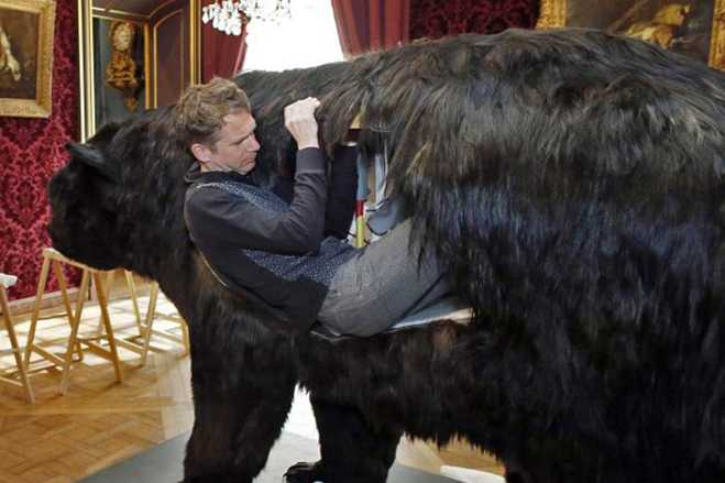 French Artist Living Inside Dead Bear Abraham Poincheval Hunting Wildlife Museum
