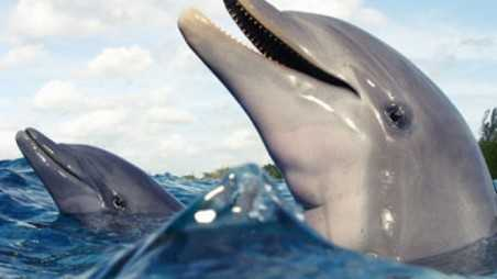 Dolphins Rescue Suicidal girl help humans