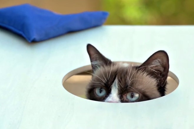 Grumpy Cat - Cat Summer Music Video