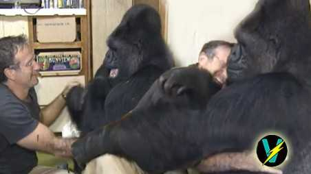 Koko Gorilla Robin Williams video suicide Death mourns heartbroken