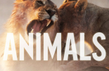 Maroon 5 - Animals Single Cover 1