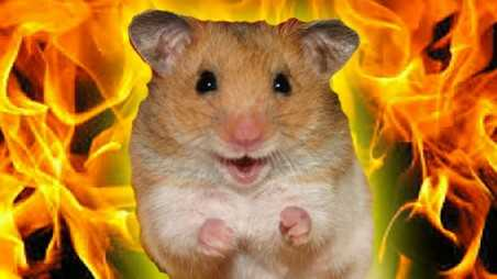 Firefighters Save Hamsters rescue washington