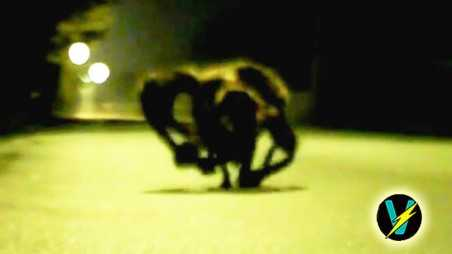 Spider Terrorizes City Dog costume video
