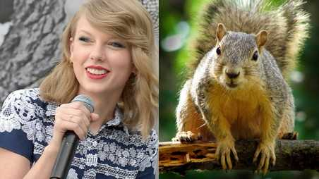 taylor swift squirrelface feature