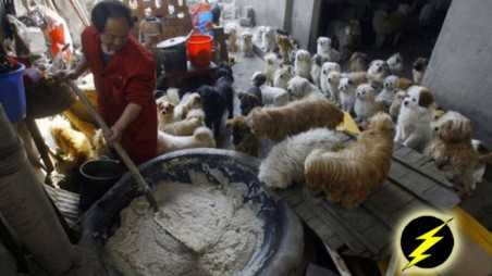 Chinese man rescues adopts 140 dogs