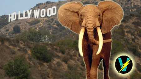 elephant poaching extinction conservation ivory hollywood china
