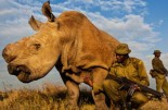 Last White Rhino Extinct Guarded Sudan