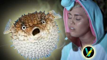 Miley Cyrus Pablow Blowfish Song Video