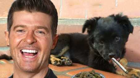 Robin Thicke Puppy Ate Weed