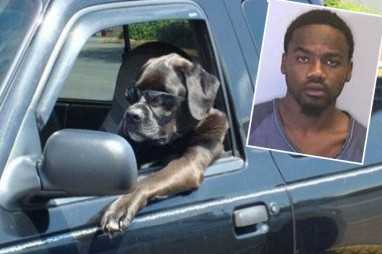 Florida Man In High Speed Chase Claims His Dog Was Driving
