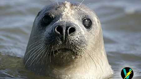 facts about seals